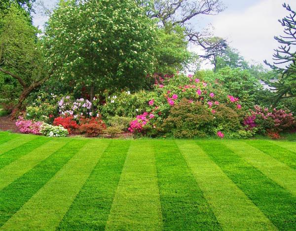 residential lawn maintenance atlanta lawn care services, incresidential lawn maintenance